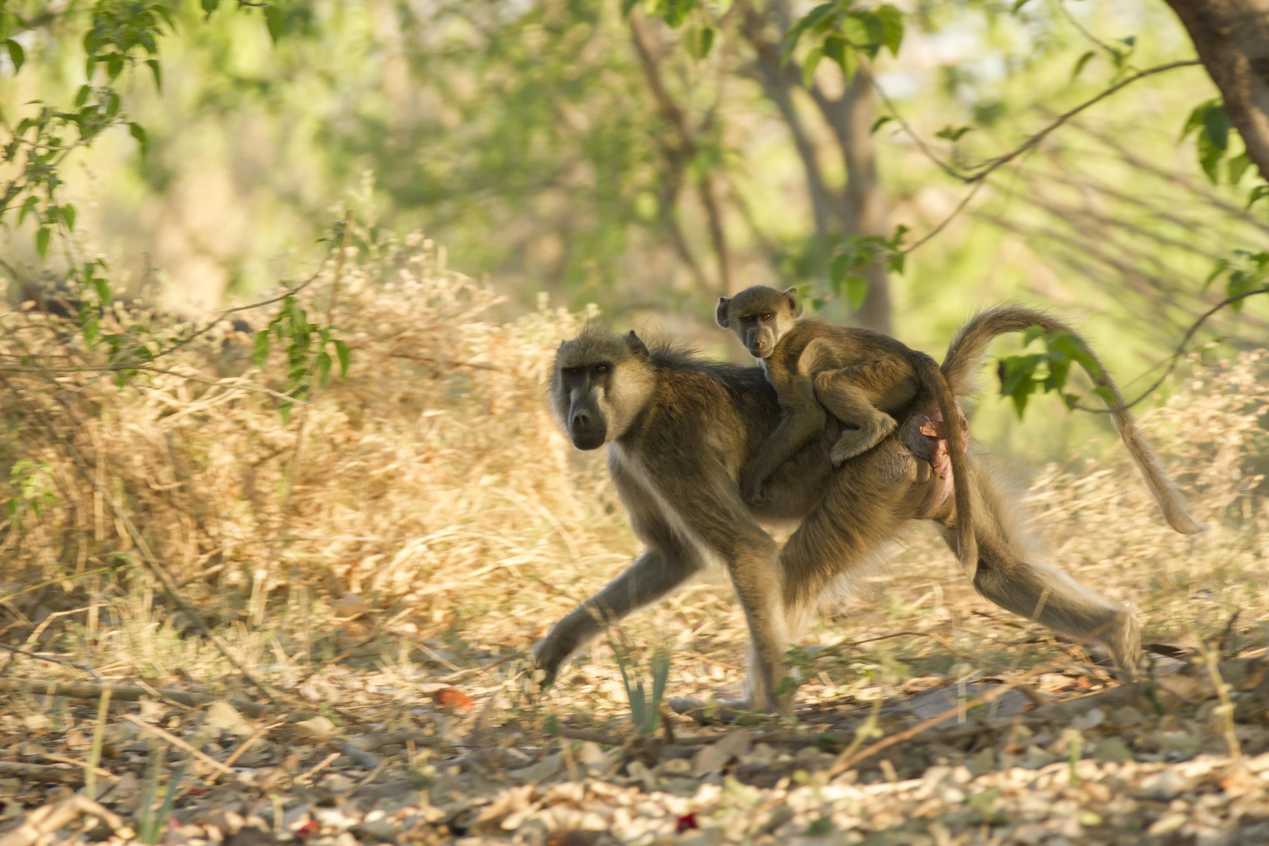 123 Botswana 443.jpg
