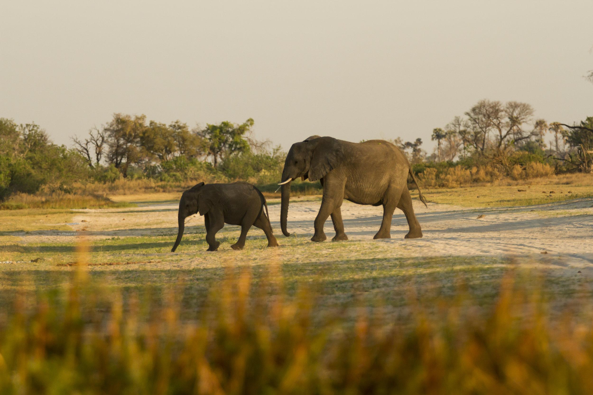150 Botswana 378.jpg
