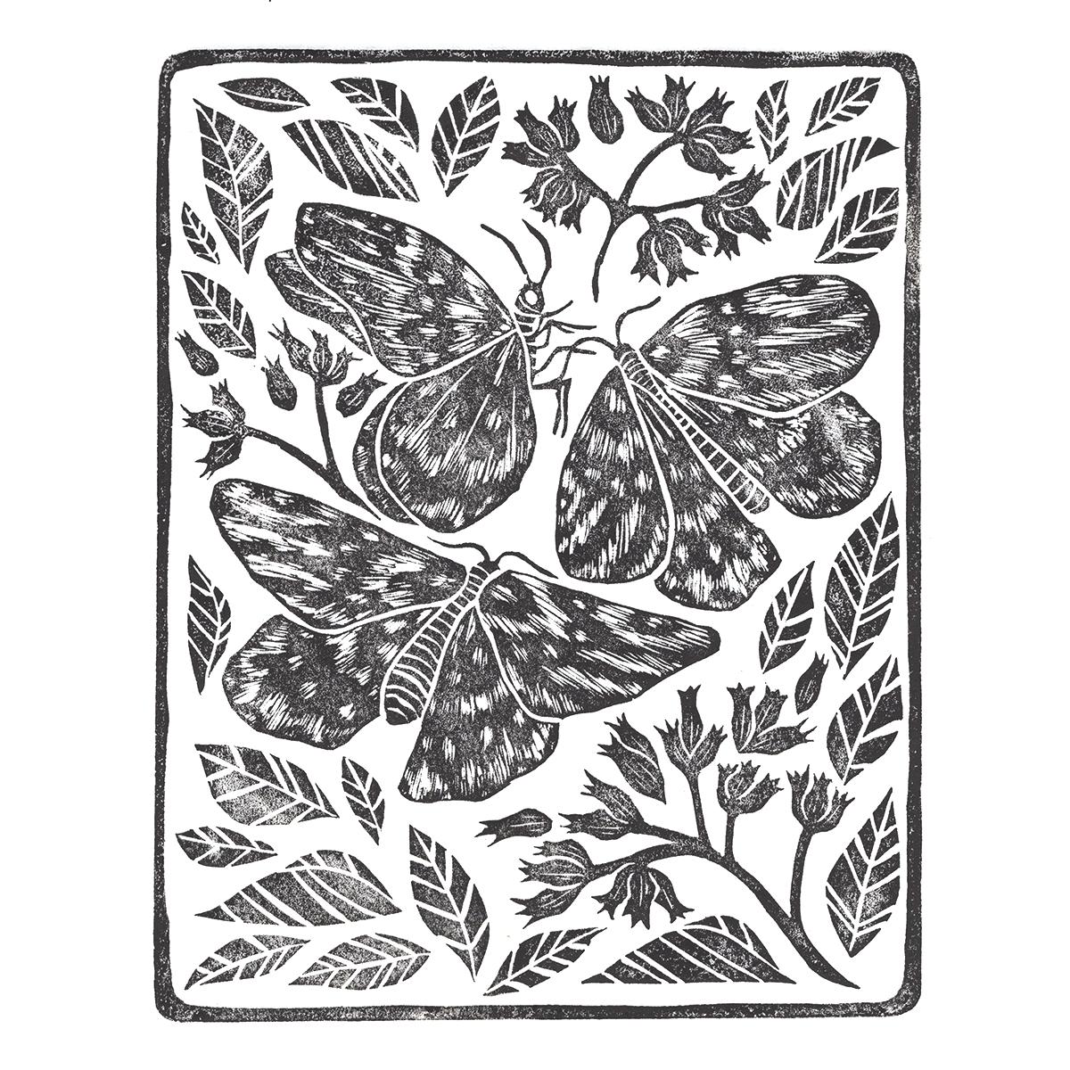 butterfly_instagram.jpg