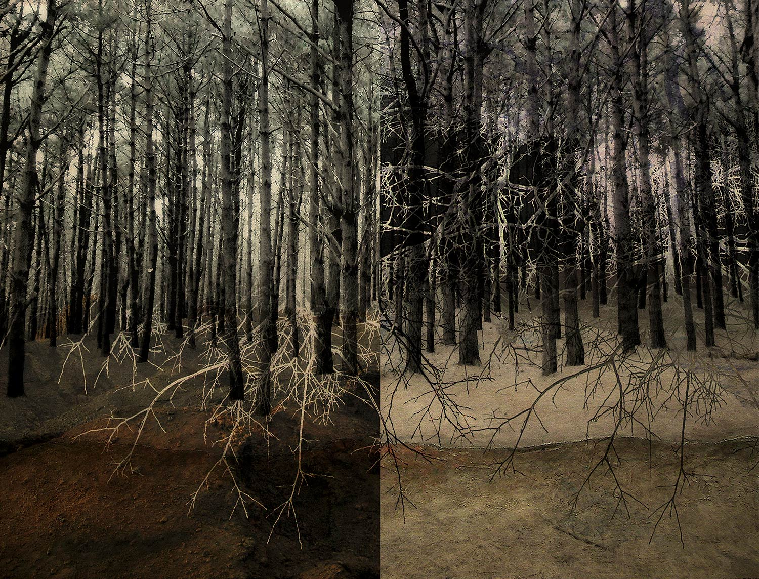 """""""Bosque dividido / Divided forest"""""""