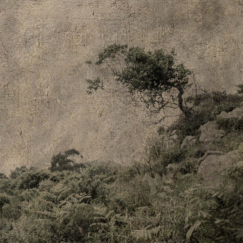 """""""Árbol de viento II / Wind tree II"""""""