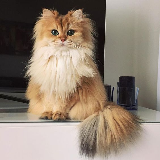 This cat is more beautiful than any human I have ever met. Why.