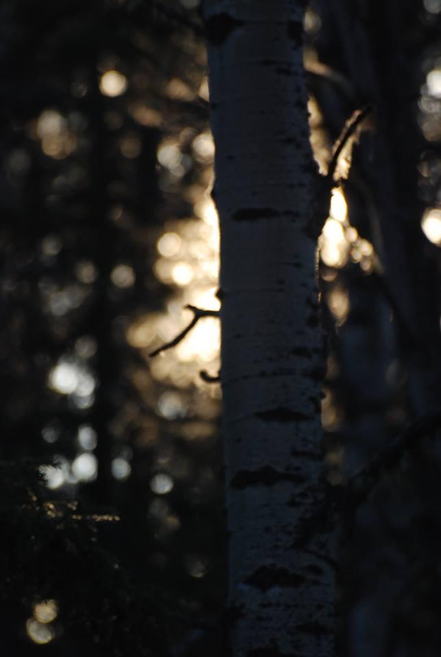 kf tree.jpg