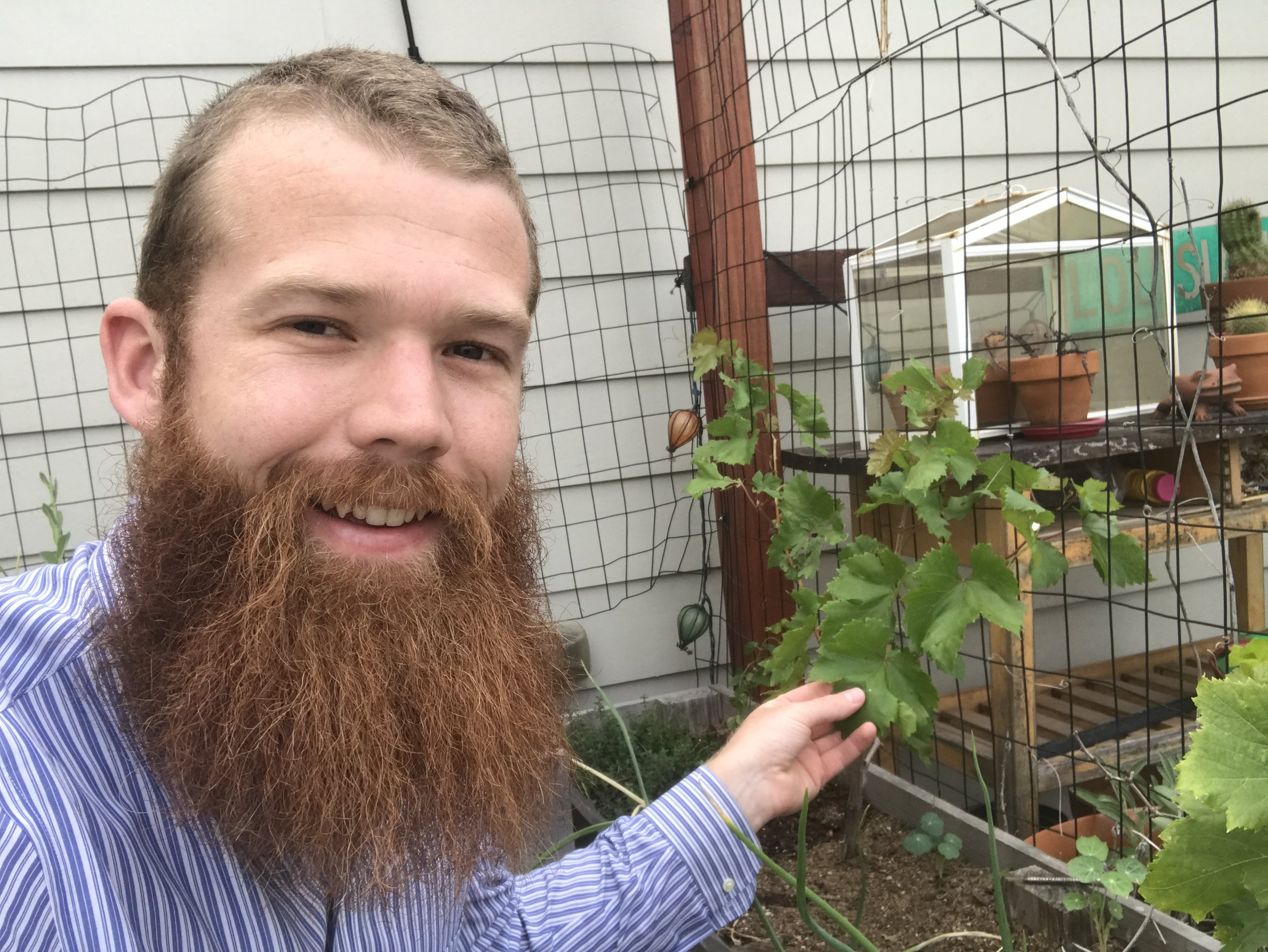 Come help plant vines, like these ones that I planted on my roof!