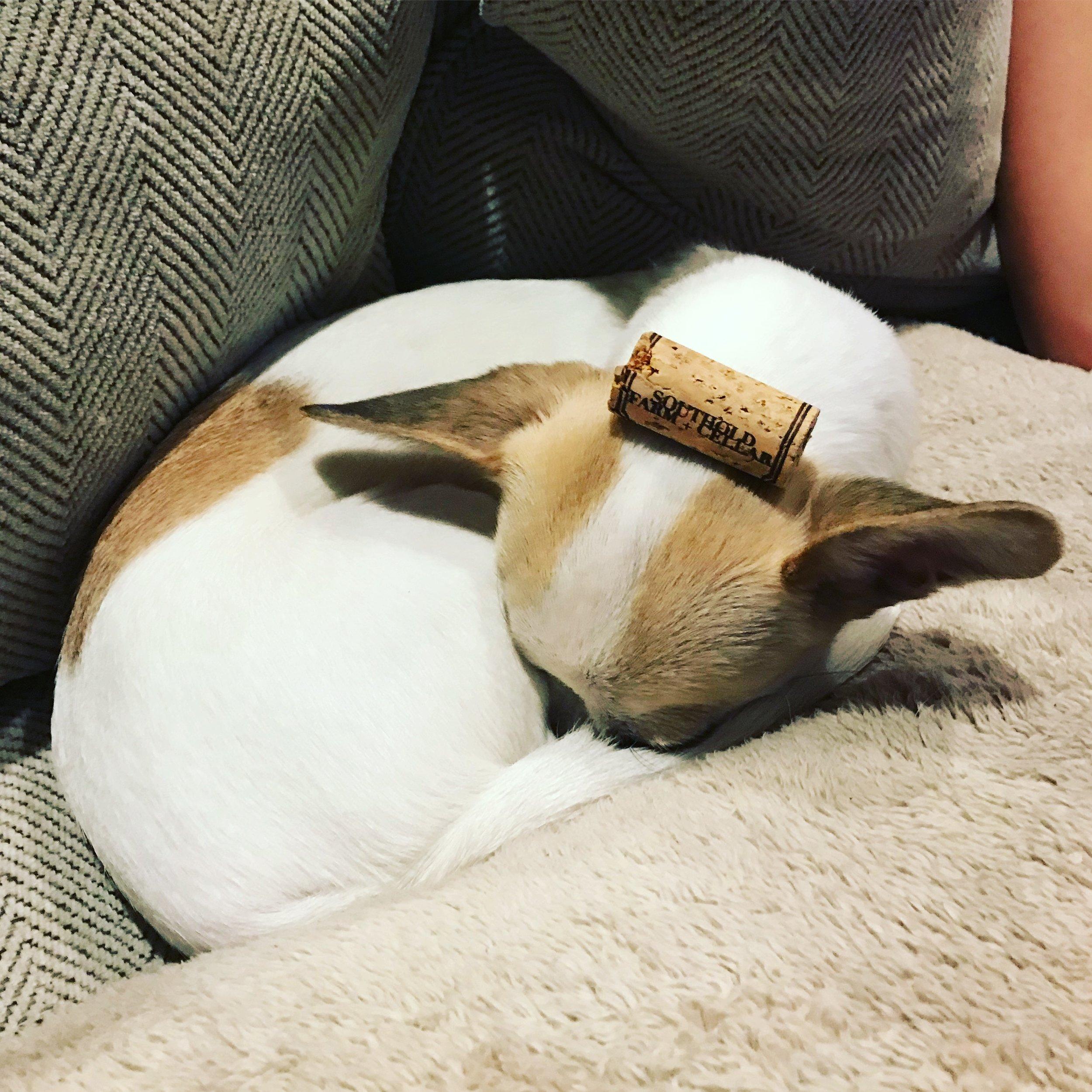 Like me, Lulu loves wine and loves to sleep.