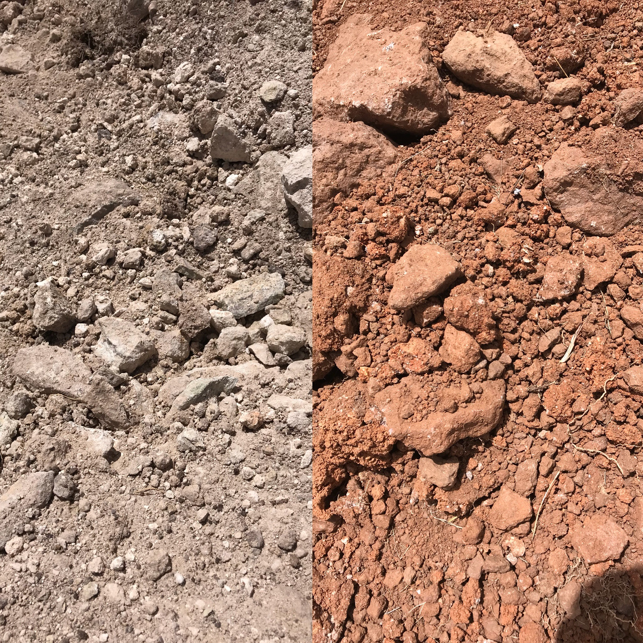 These two pictures are not altered at all. Each side is a different soil at Alta Marfa. They are only about 30 feet apart in the vineyard.