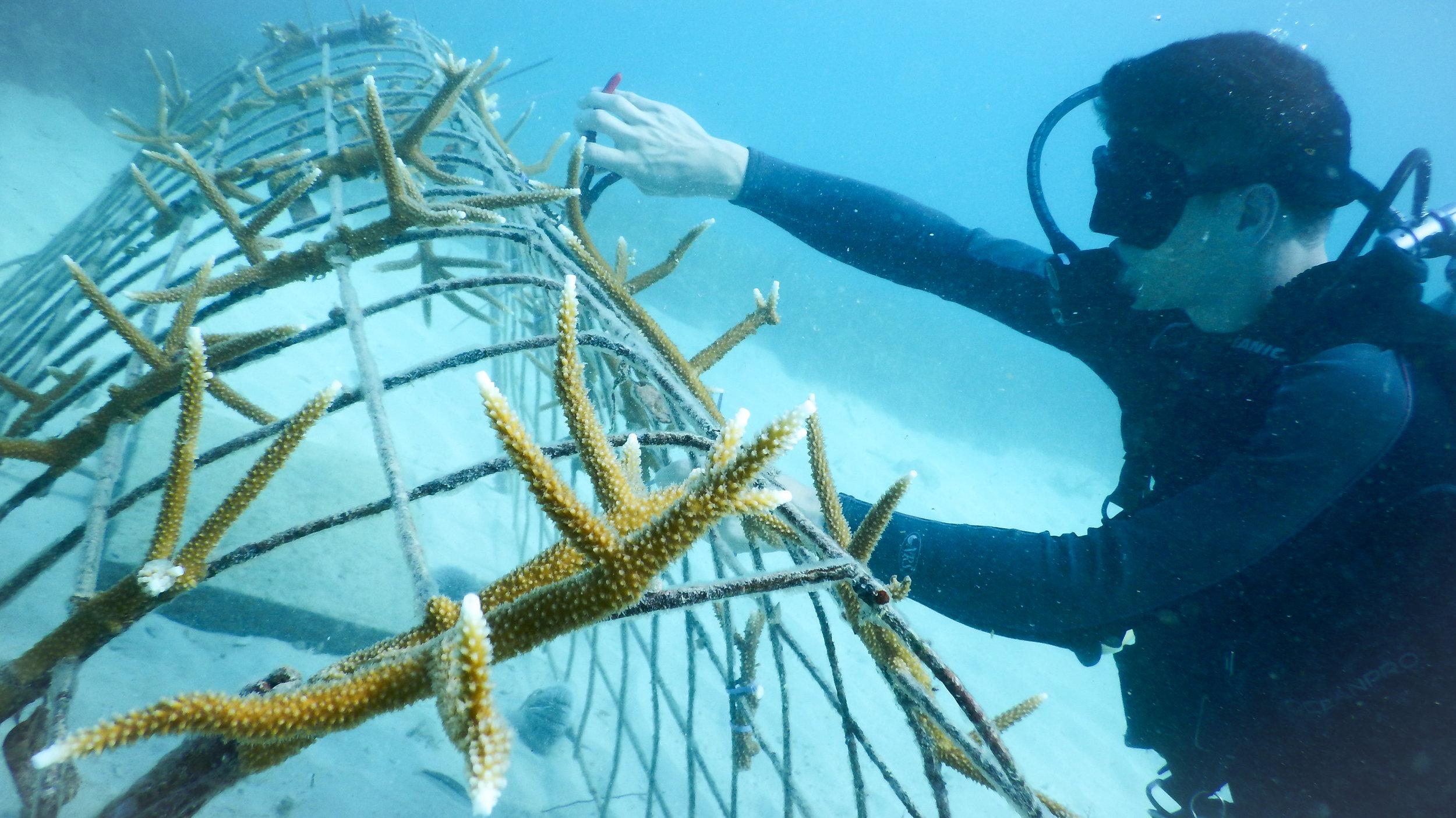 Photo Credit -Amiga Island Ecological Foundation