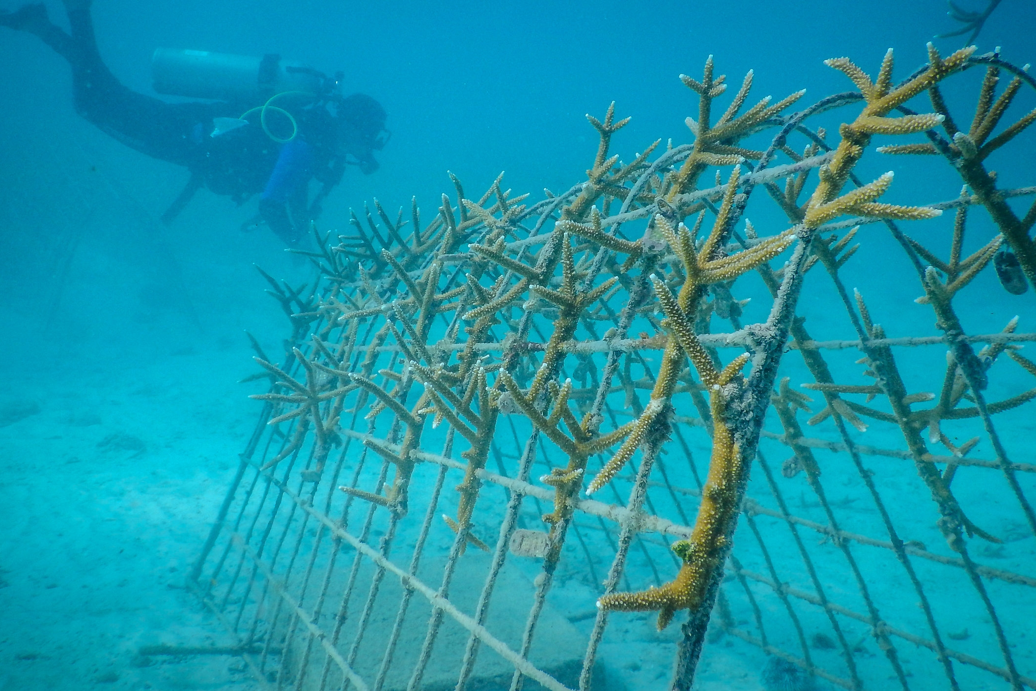 Utilizing a cutting edge techniques, AIEF constructs efficient Coral Nursery structures.  Photo Provided by Amiga Island Ecological Foundation, Haiti