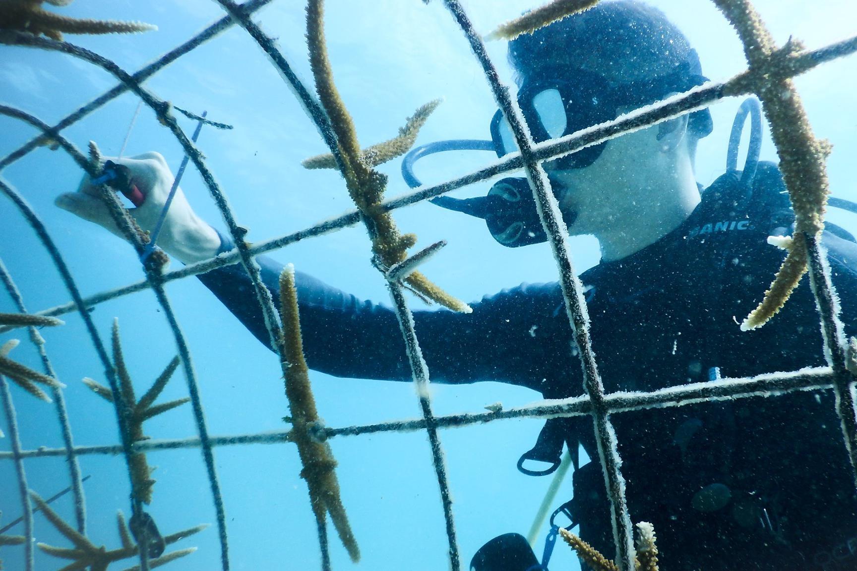Jeremy Raynor tending the AIEF Staghorn Coral Nursery.  Photo Provided by Amiga Island Ecological Foundation, Haiti