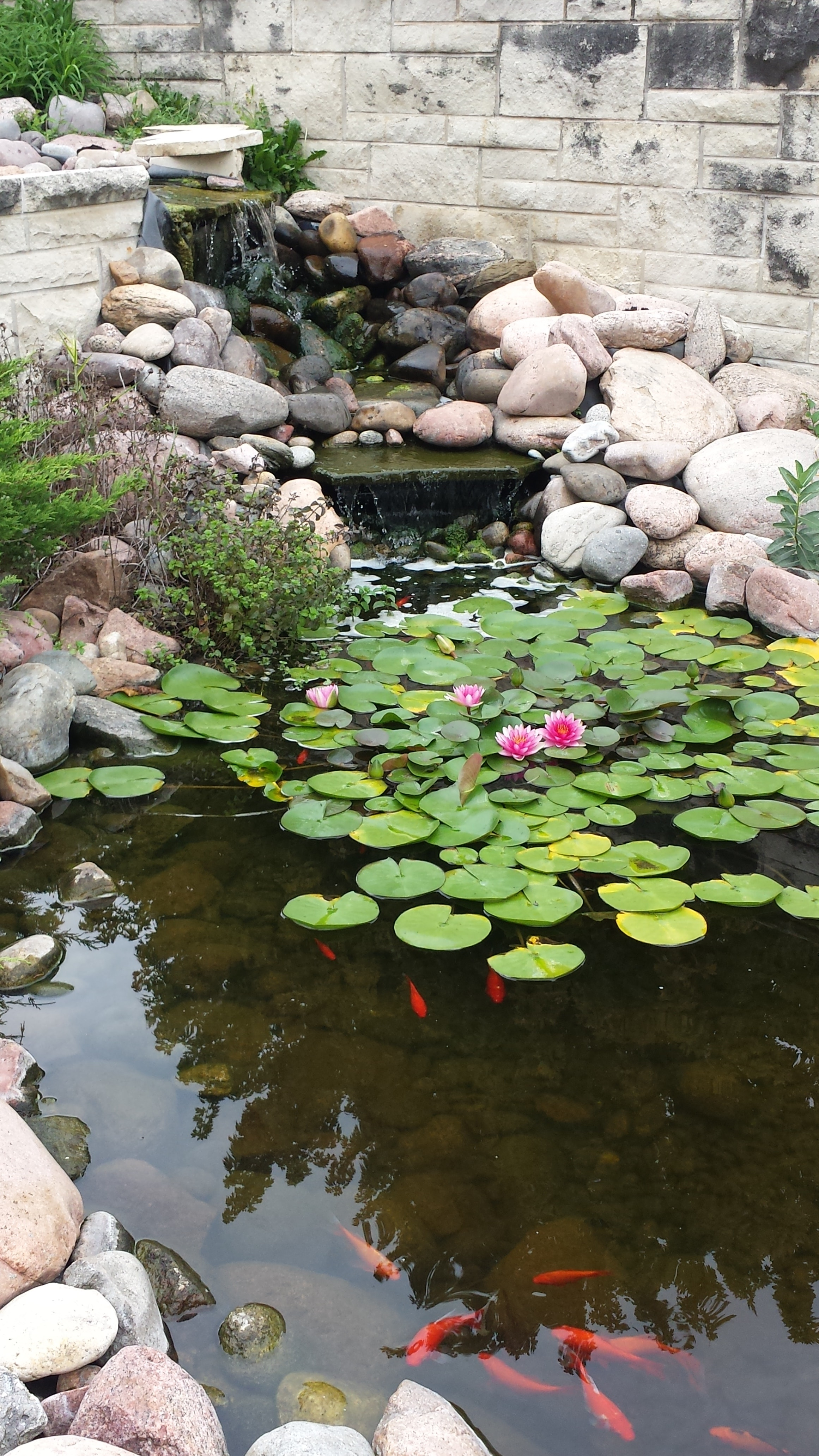 calm-waters-fishes-garden-pond-775986.jpg