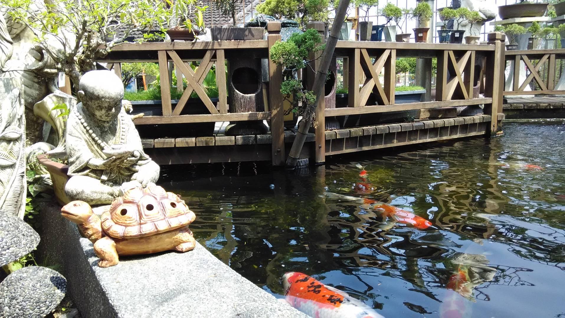 Japanese_Koi_Pond.jpg