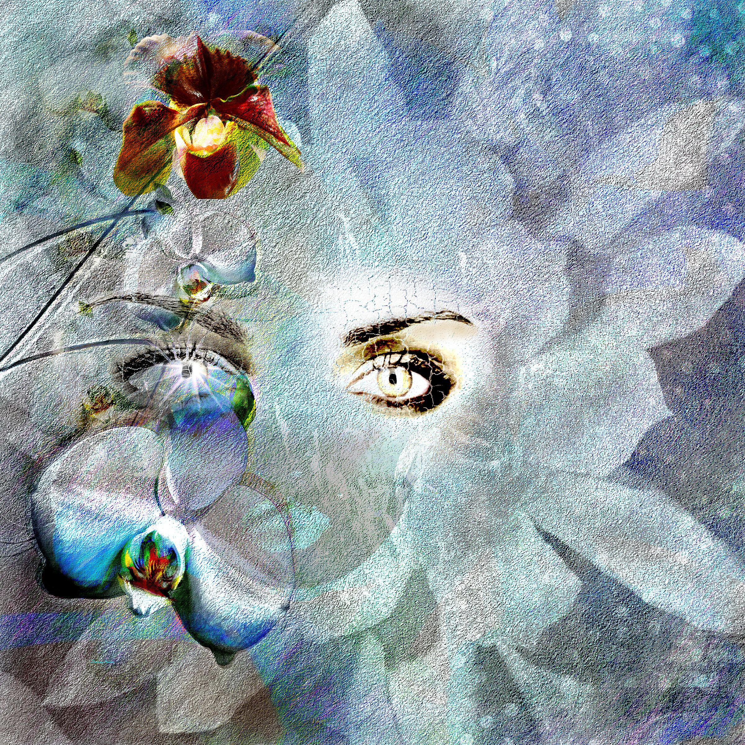 DorianaSinnett_Orchid Diva_.jpg