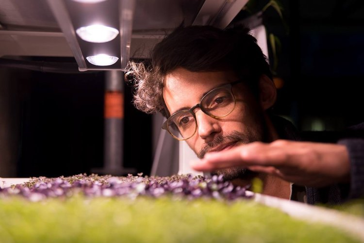 Microgreens being tended to by the passionate urban farmers at Farmwall