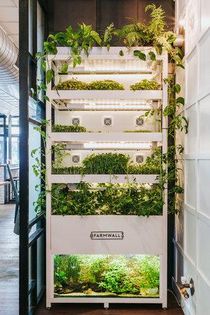 Farmwall Aquaponics System