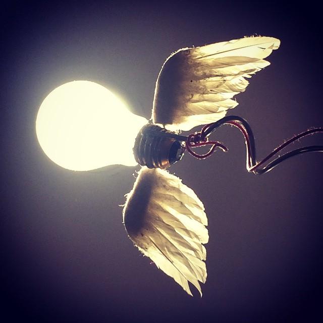 flybulb.jpg