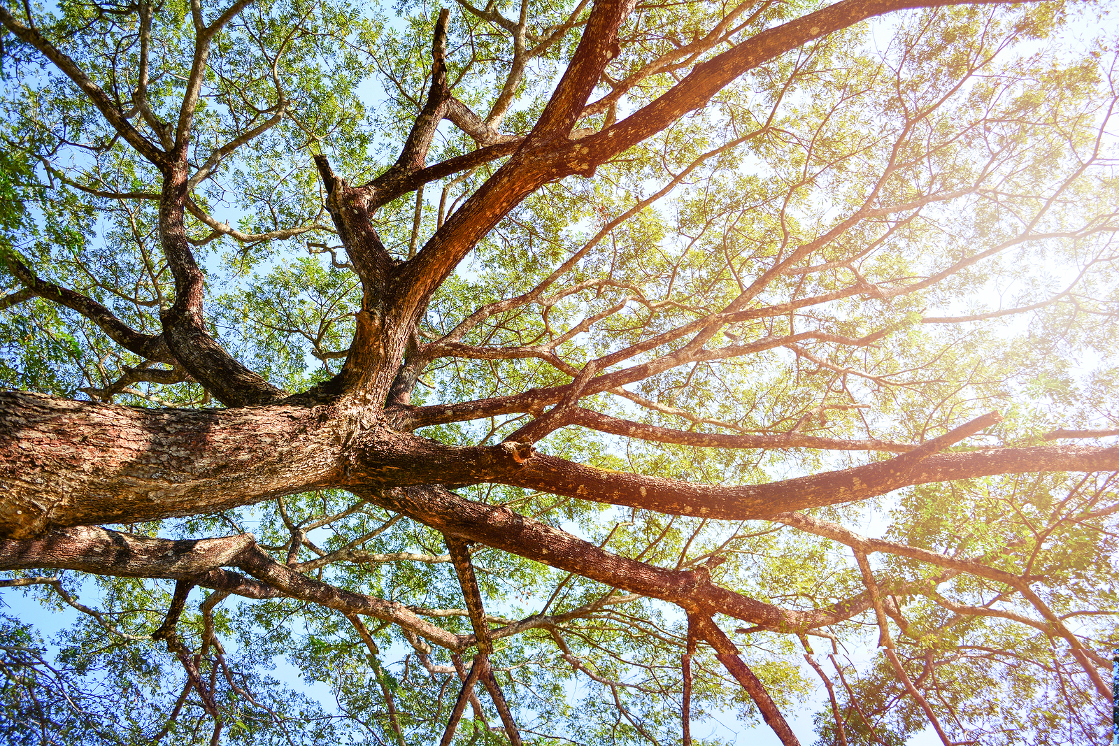 bigstock-Looking-Up-On-Tree--View-Unde-286986835.jpg