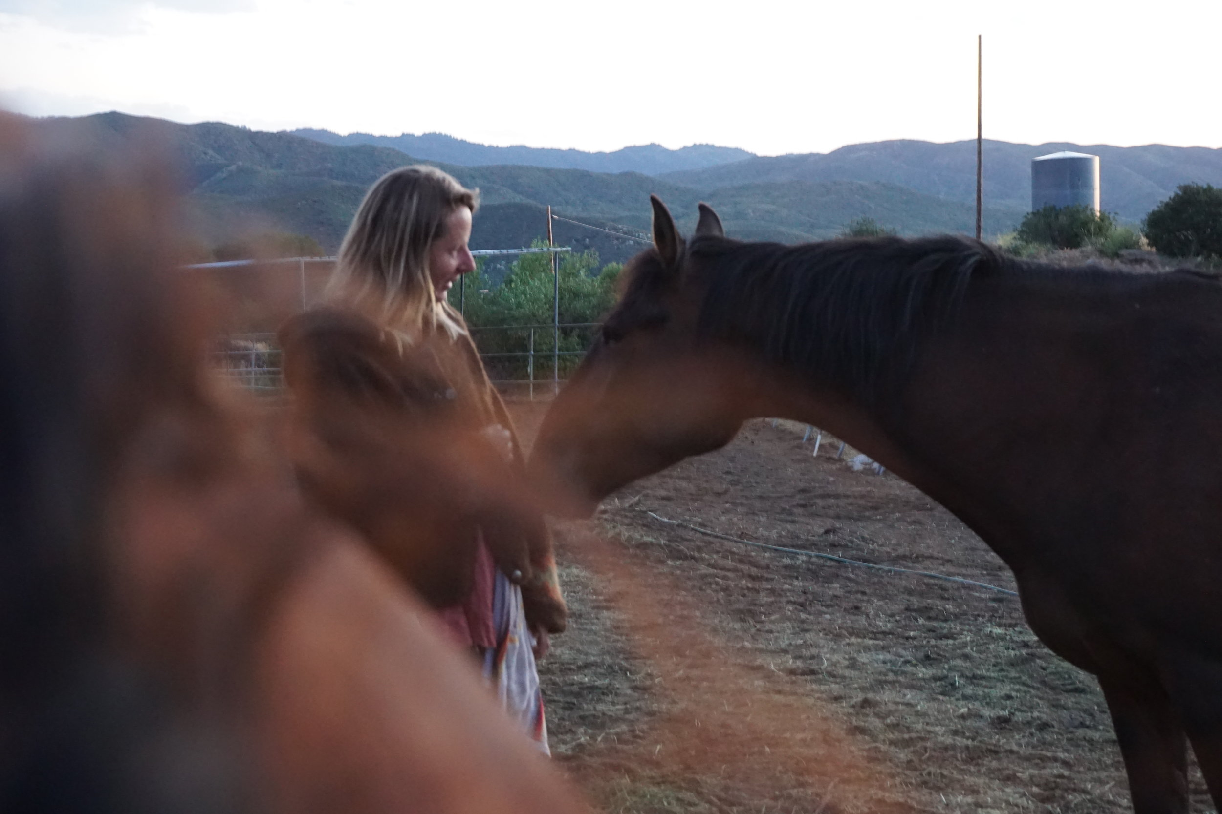 EQUINE GUIDED SOULWORK