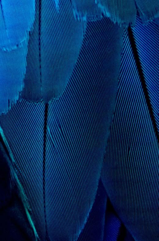 Bright navy blue - bright clear spring neutrals