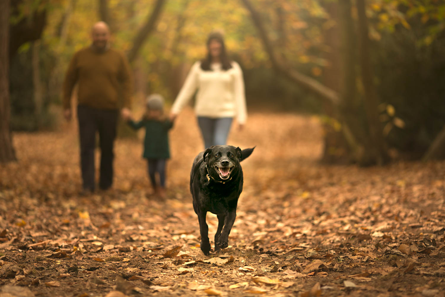 Dog running towards the camera with family blurred in background on Autumn family shoot at Ampthill Park in Bedford.