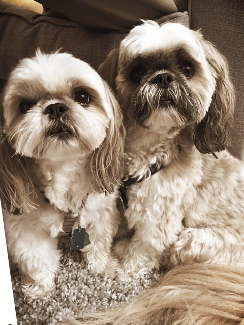 Ginger & Ewok- Lansdale, PA