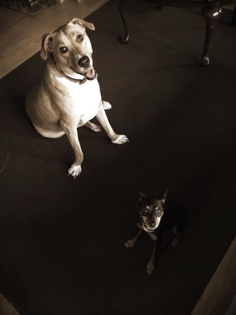 Bruno & Mini- Blue Bell, PA