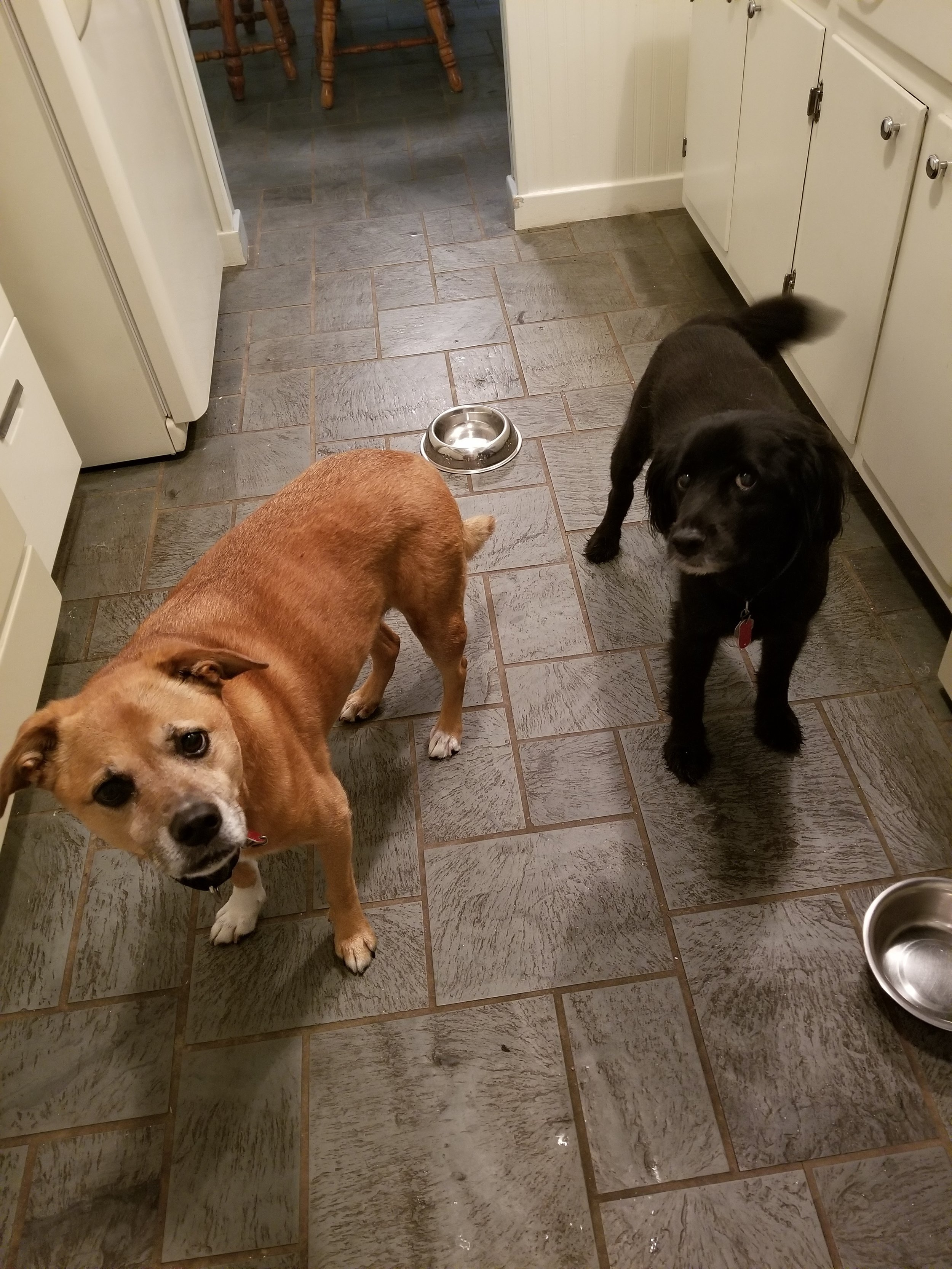 Daisy & Guiness- Lansdale, PA