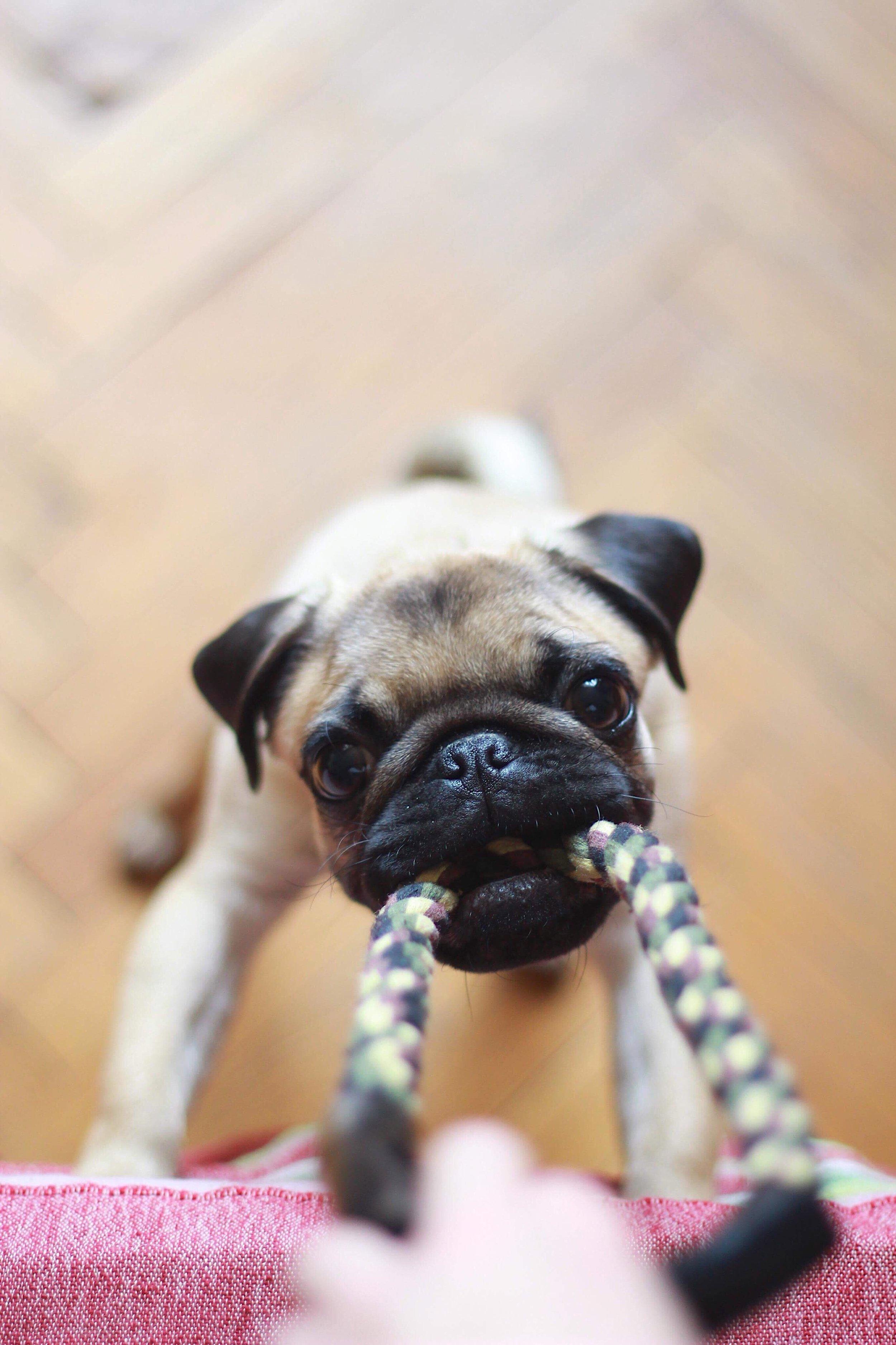 dog-with-chew-toy.jpg