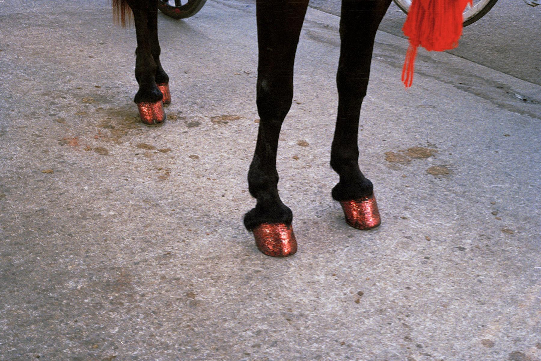 (edit) HorseHooves 002.jpg