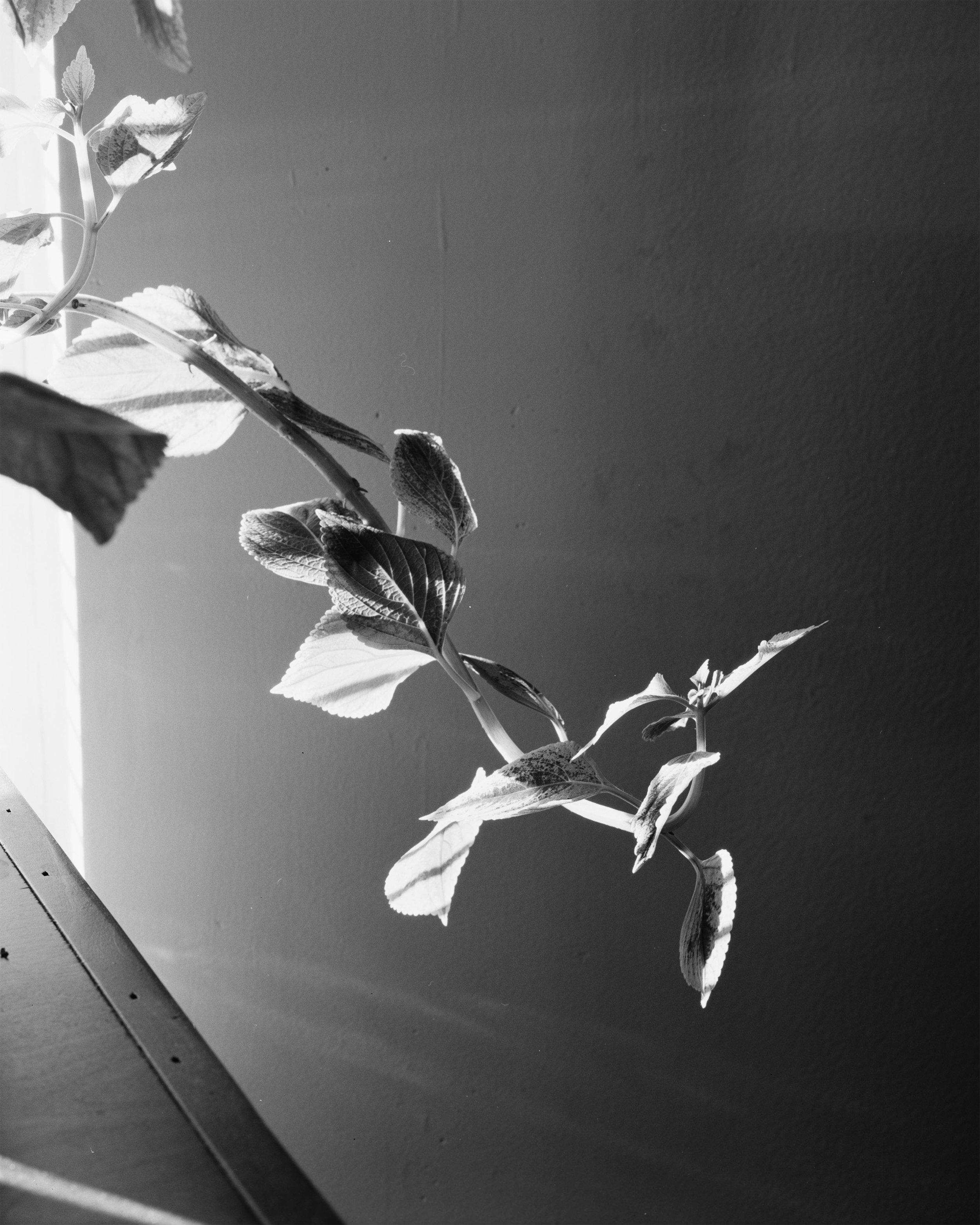 PlantCurl 001.jpg