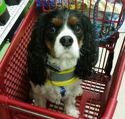 "3.  ""I'M A GOOD DOG"" includes:     a. Functional Behavior Assessment     b. Behavior Modification Plan     c. 4 – 1hr. Walk & Trains    d. Progress/Transfer Session     e. Cost ~ $333"
