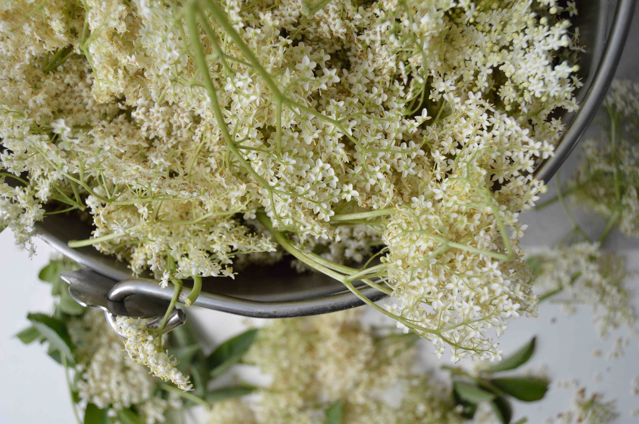 elderflowers cordial.jpg