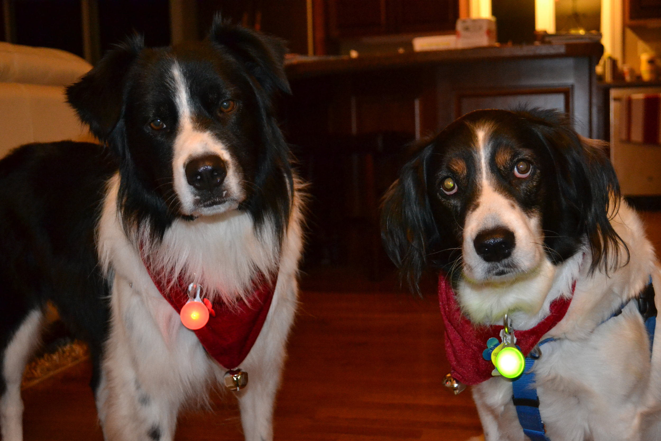 These furry faces bring great enjoyment and balance to my life (and they clearly took this picture VERY seriously...)!