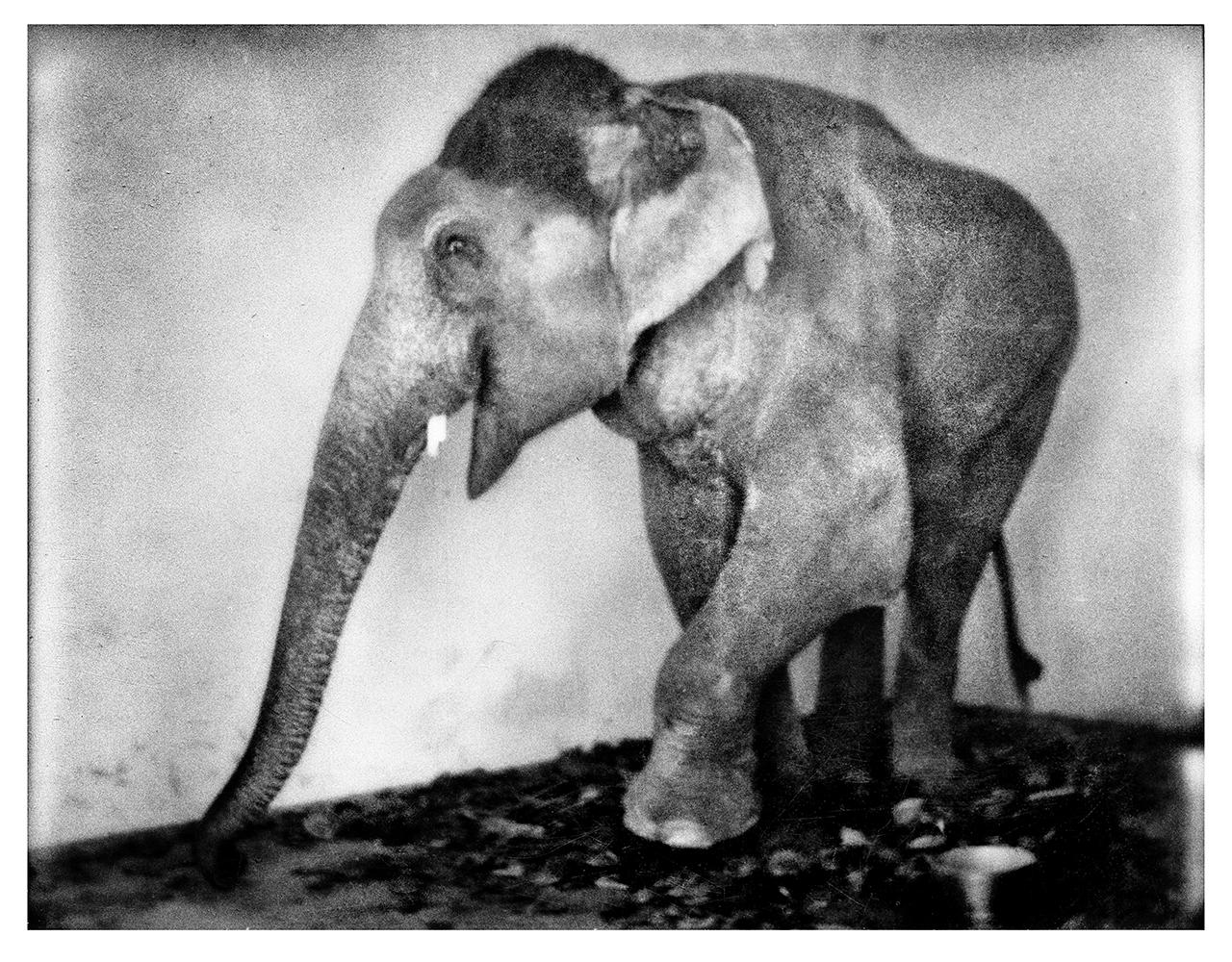 elephanat copy.jpg