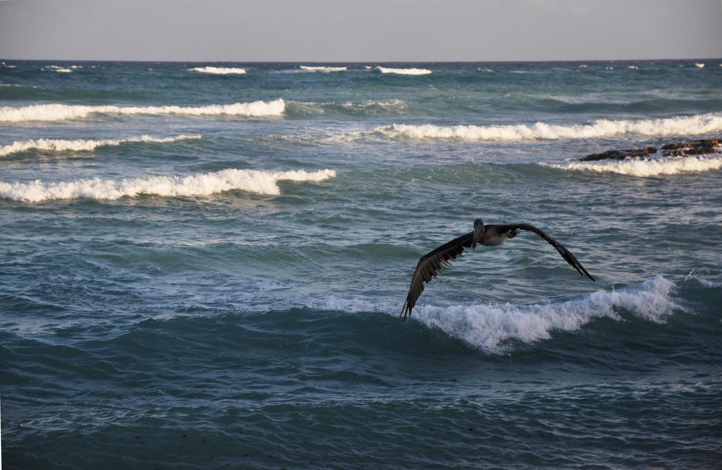 Pelican's flight is very peculiar