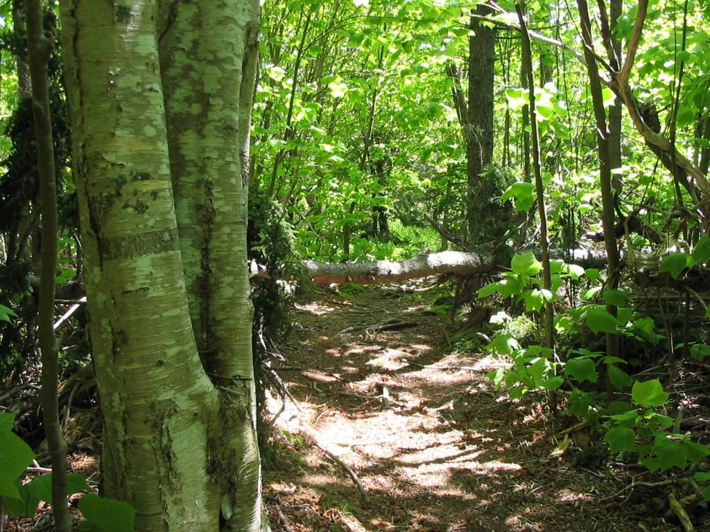 monhegan hiking forest.jpg