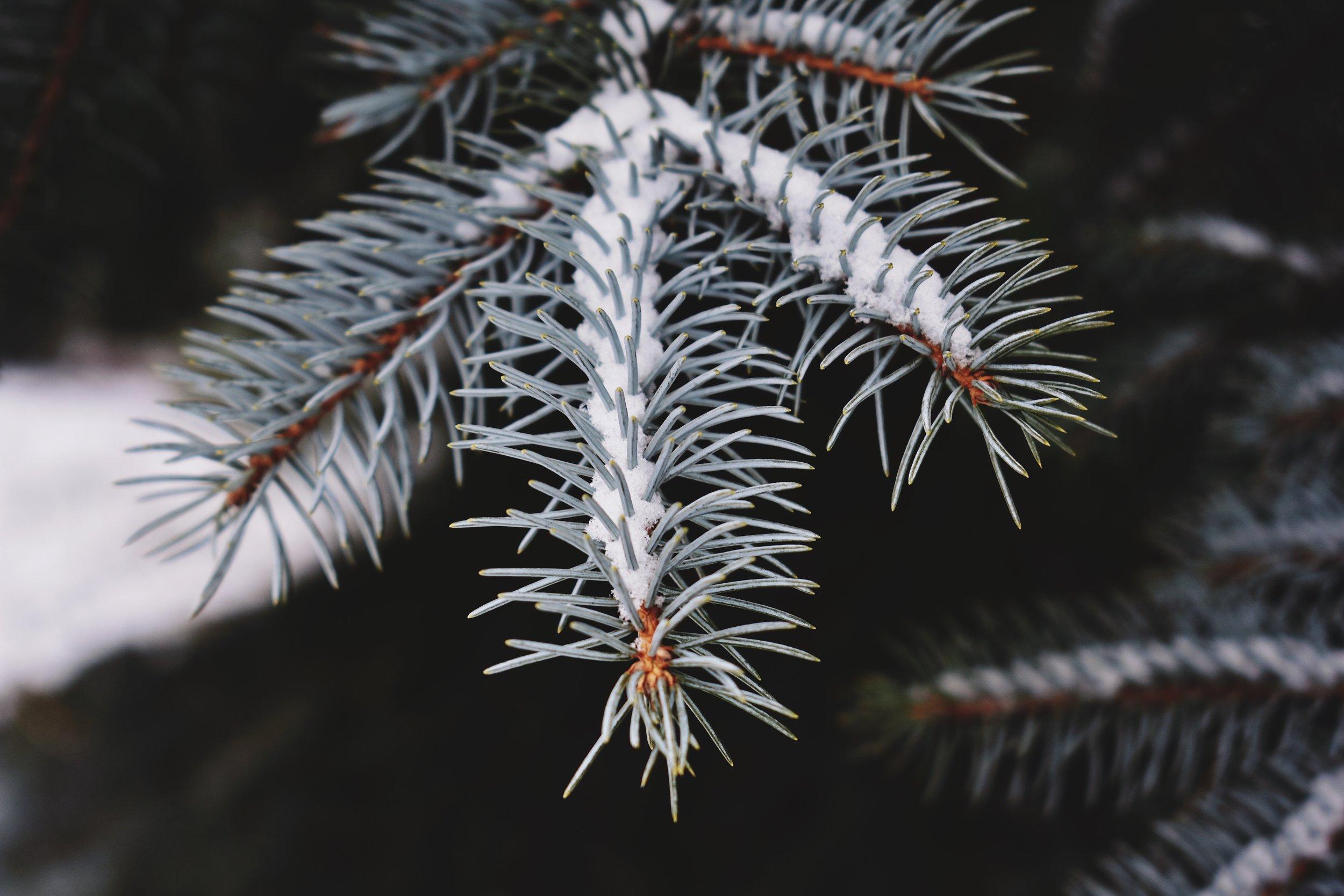 blue-spruce-rucksack-magazine-2