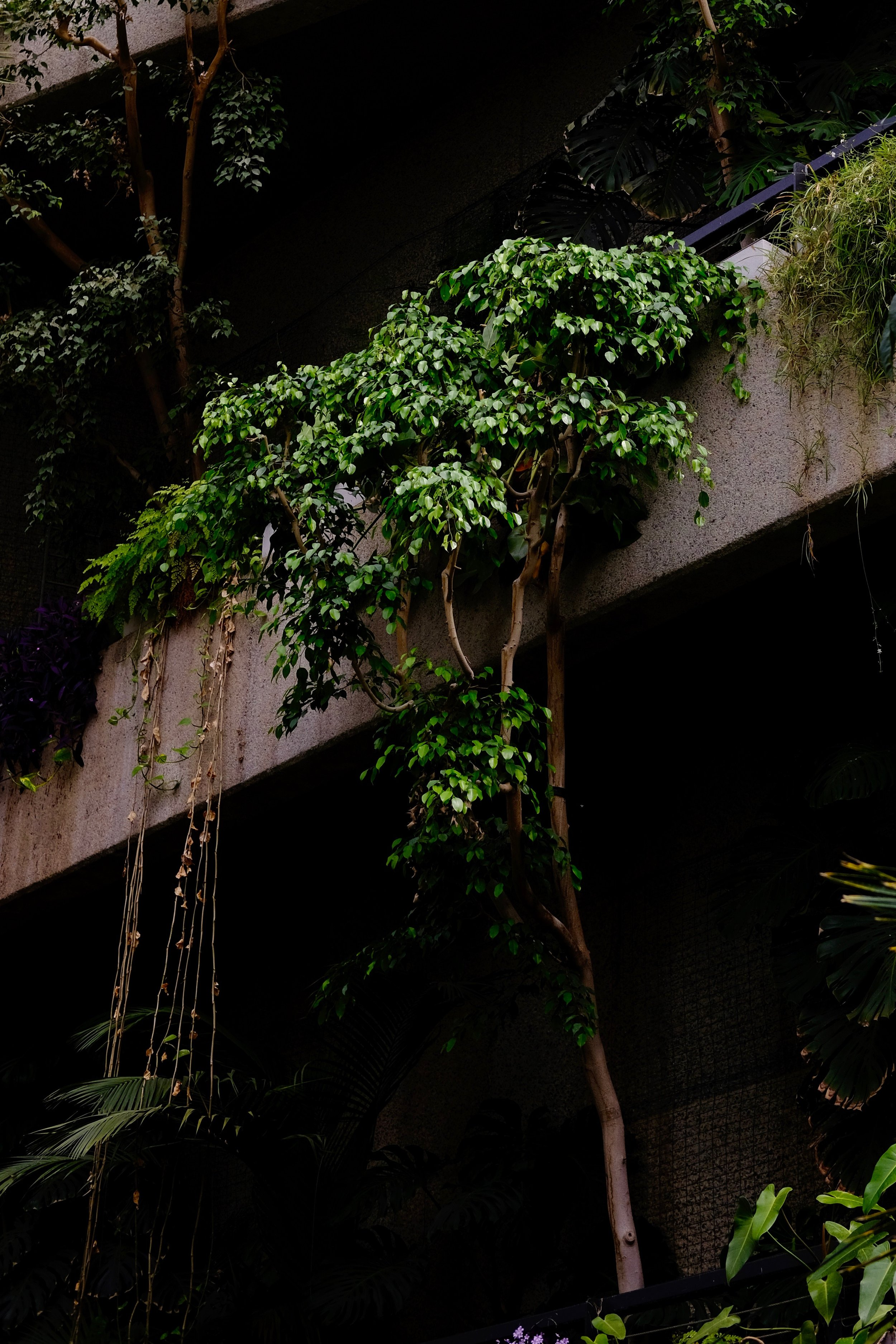 barbican-conservatory-rucksack-magazine