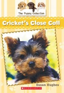 Cricket's Close Call