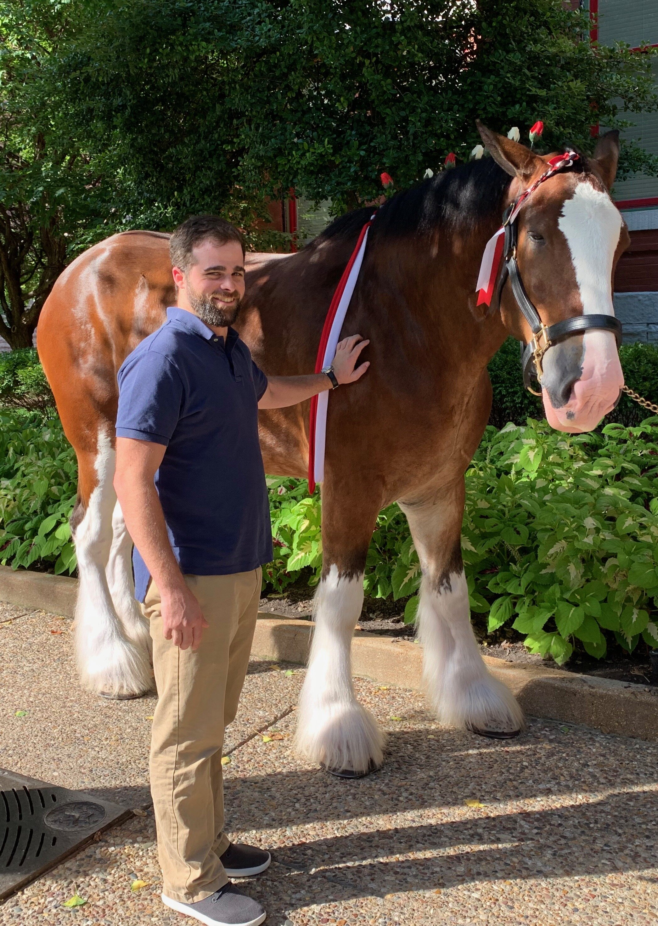 Connor clydesdales.jpeg