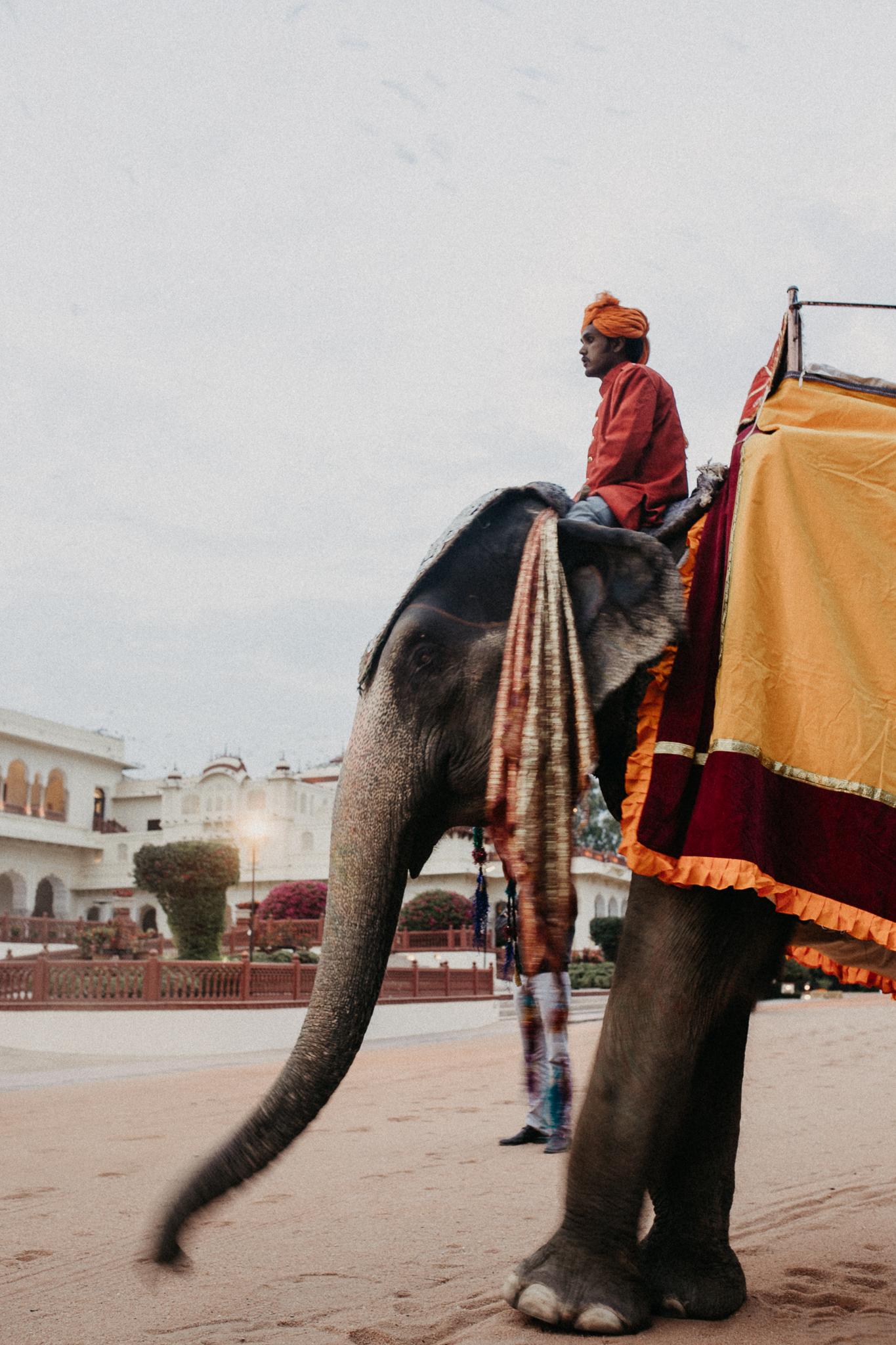 JaipurElephant.jpg