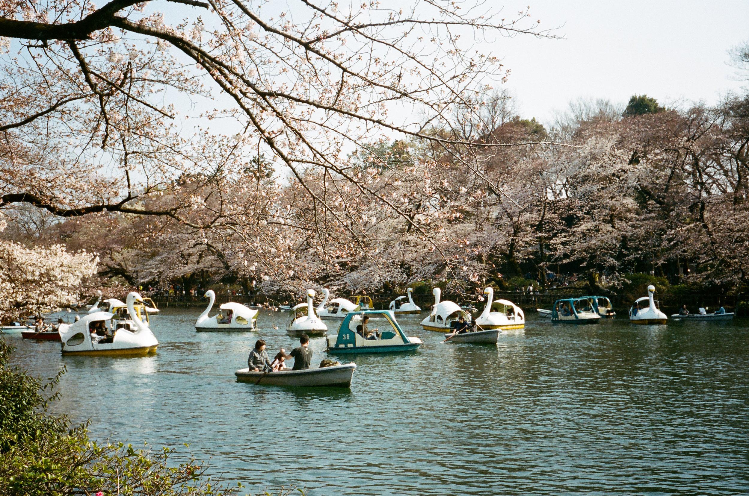 17-JAPON-argentique-Tokyo-fevrier-2017-0045.jpg