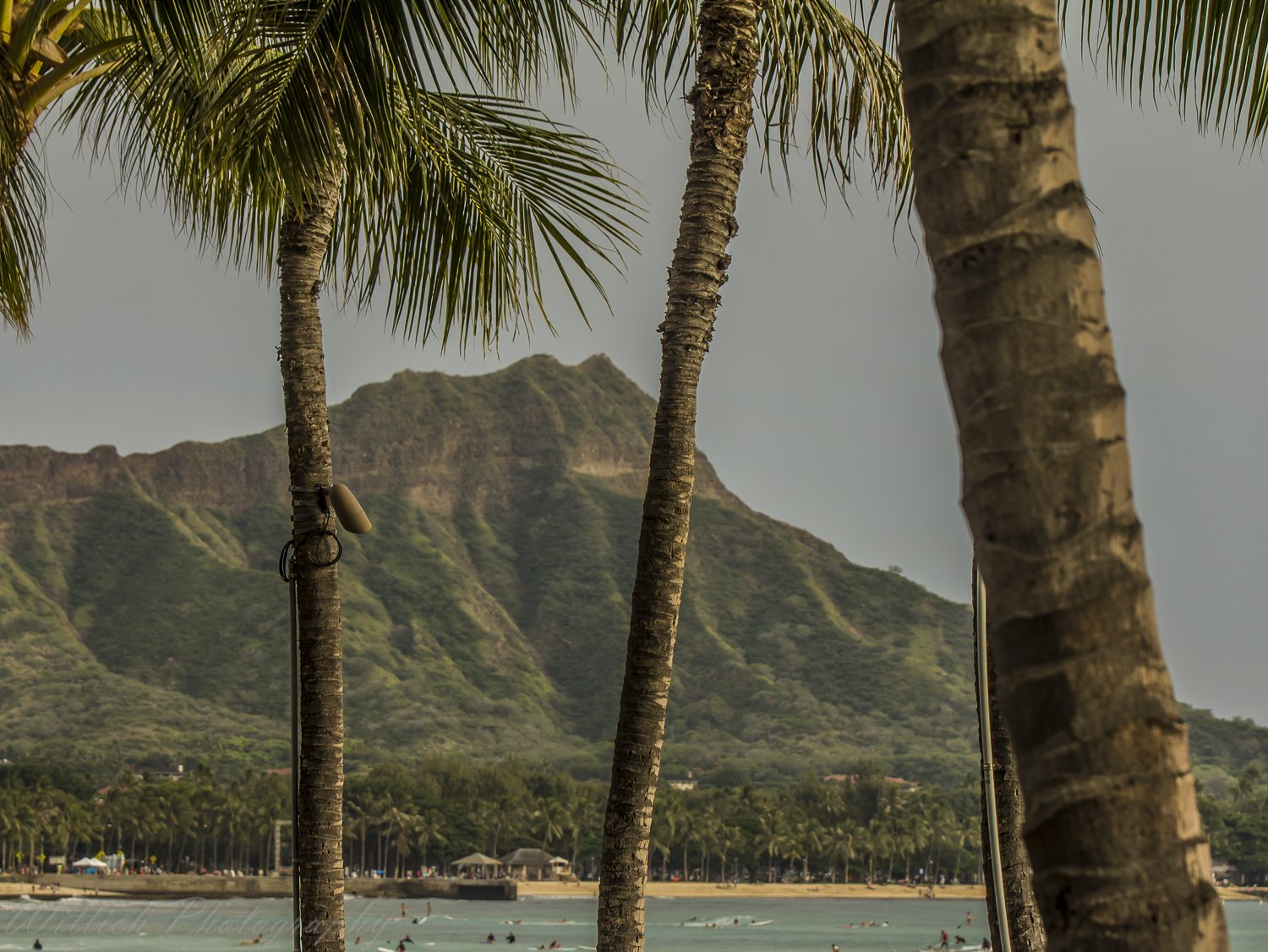 20180127-hawaii days 1-4_MG_0706-2.jpg