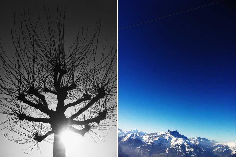 iphone VSCO cam tree & sky