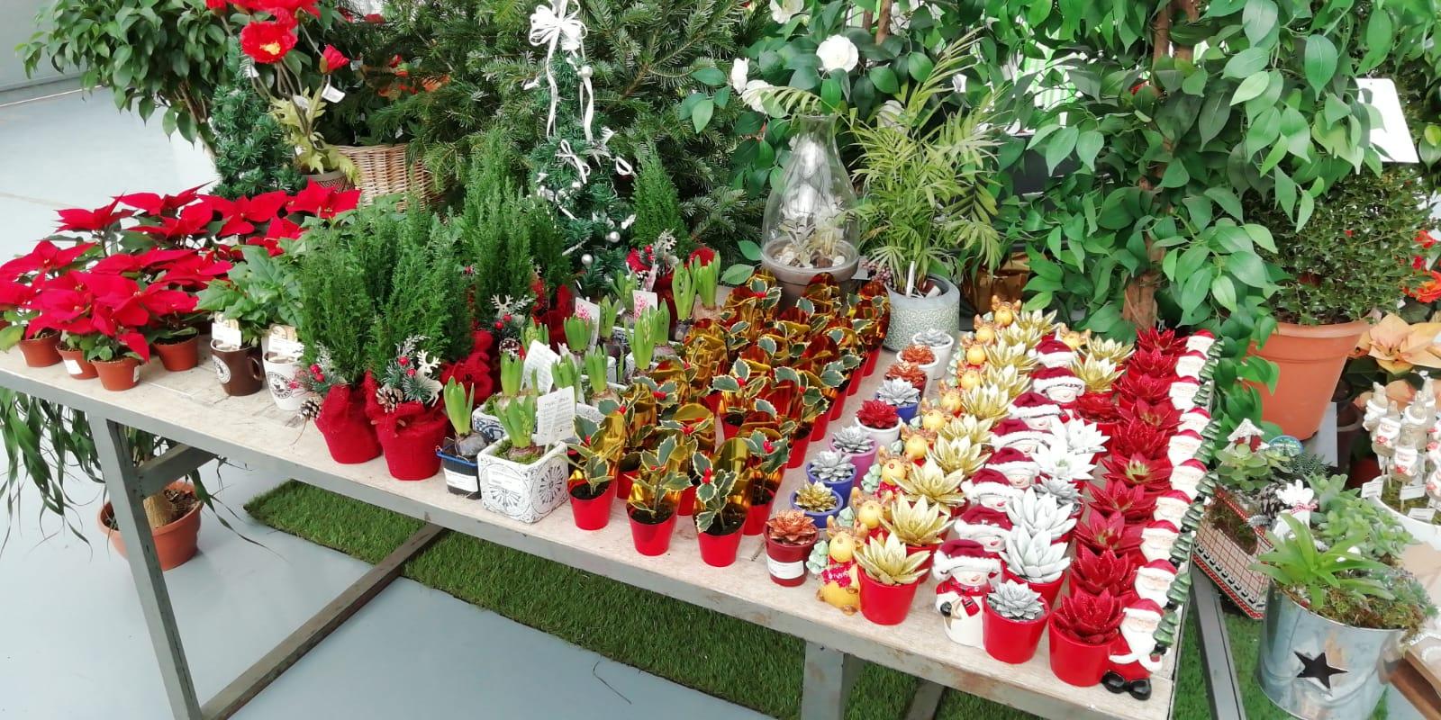 plantas navidad zaragoza atades