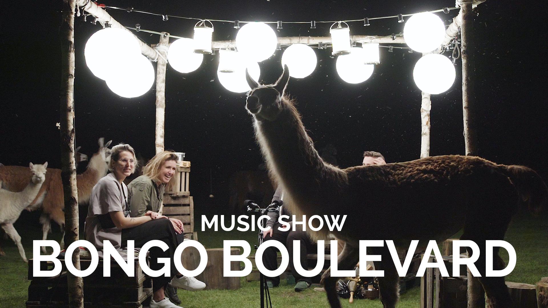 bongoboulevard.jpg