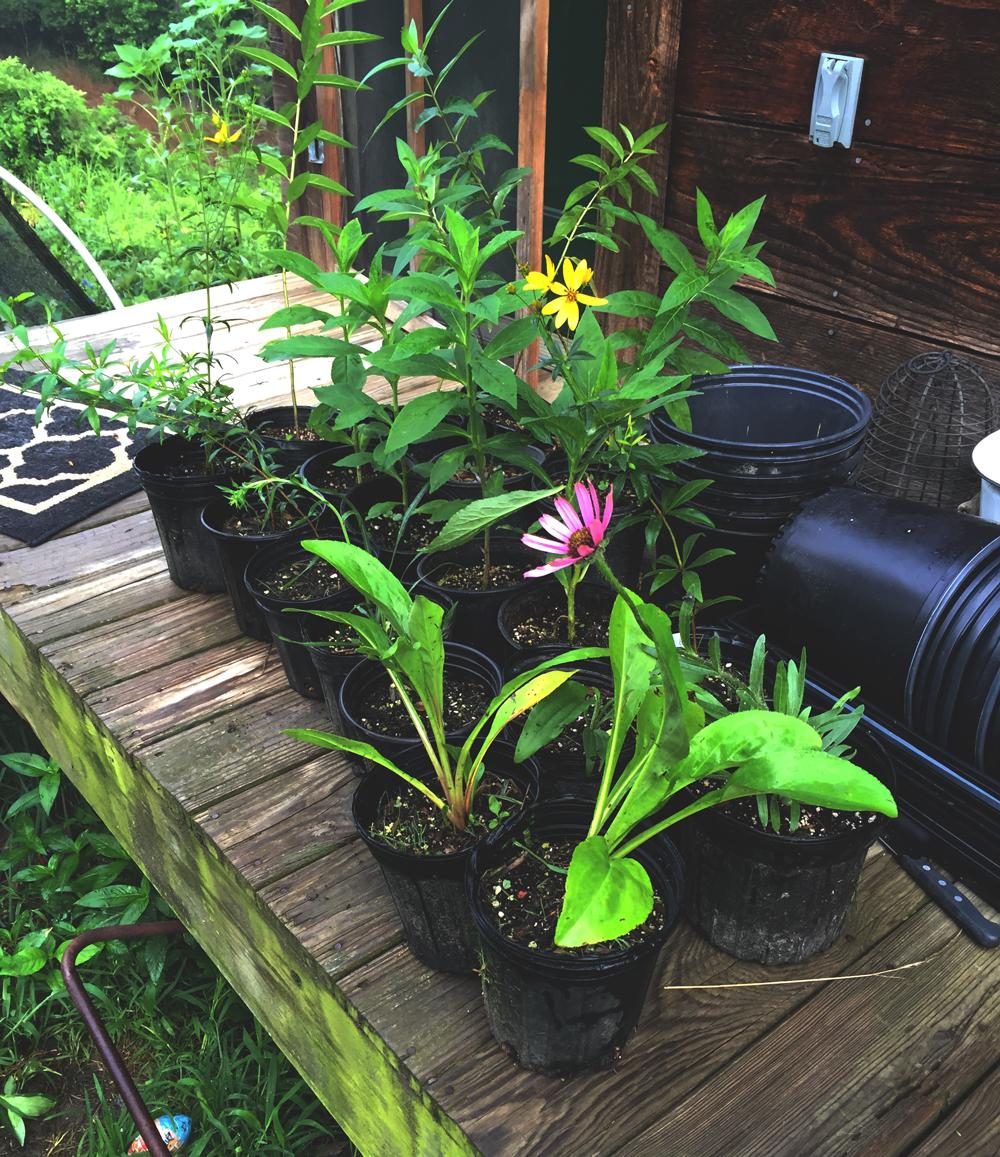 plants-in-pots.jpg