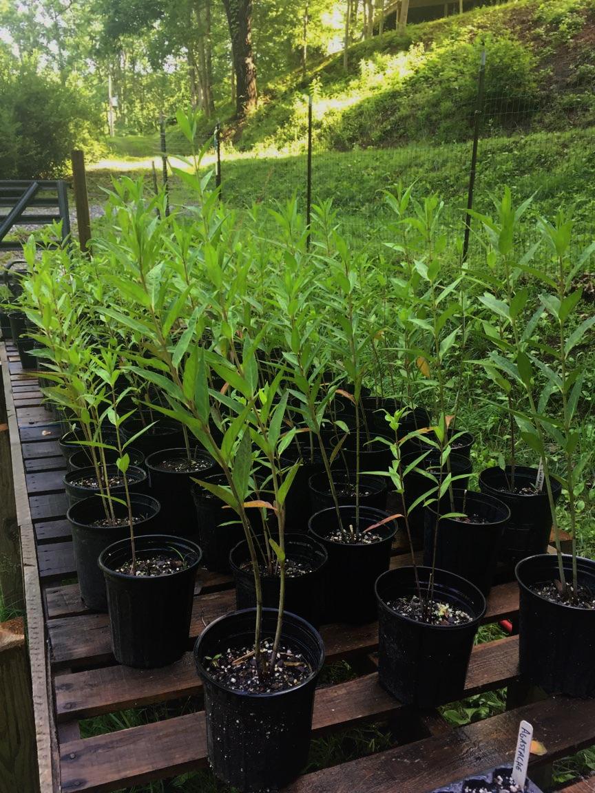 PLANT LIST -