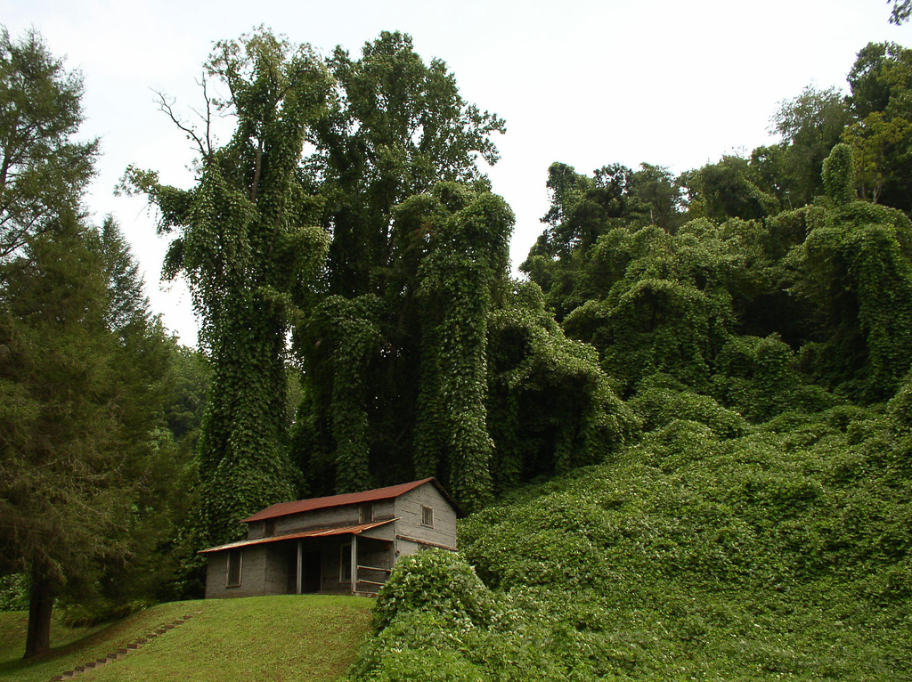 INVASIVE VEGETATION REMOVAL -