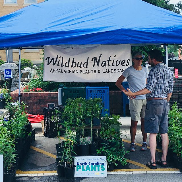 Come catch us at the Garden Jubilee in Hendersonville, today and tomorrow 9-5.  Fill in your pollinator garden, and finish with some herbs from @ourfriendlyallies just a couple blocks down the street.  Rain or shine we're here! #gardenforwildlife  #nativeplants  #gardenjubilee2018  #wildbudnatives