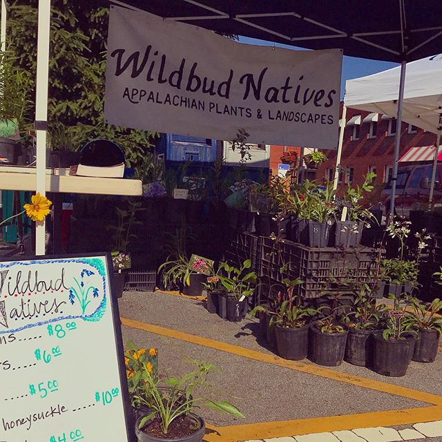 Last chance to get your #native #perennials at Hendo's #gardenjubilee this weekend! We'll be out and about til 5! 🌱🌿🌻🌎#appalachiangardening #madisoncountync #gravityfed #wnc #farmher #farmersofwnc #plantstagram #amsonia #milkweed #savethemonarchs #wildbudnatives #fullsunplants #shadelovingplants #coneflower #aster #baptisia #weouthere #eversouth #appalachiannative #ncflowers #yougrowgirl #menwhogarden